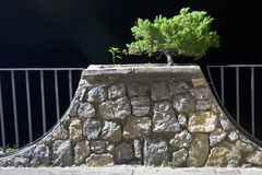 Bonsai, plant, night 2 Royalty Free Stock Photos