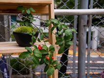 Bonsai plant on a wooden shelf against a metal fence