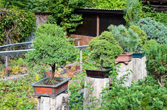 Bonsai plantation Stock Images