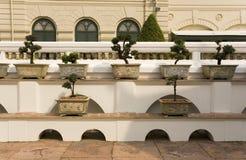 bonsai plantatorów drzewa Zdjęcie Royalty Free