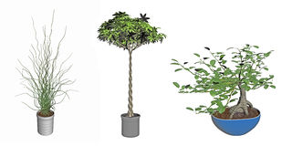 Bonsai plants Royalty Free Stock Photos