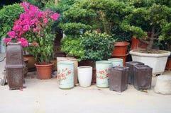 Bonsai plants Stock Photos
