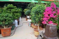 Bonsai plants Royalty Free Stock Photography