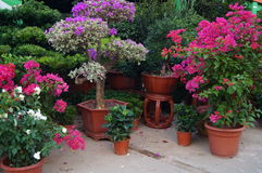 Bonsai plants Stock Photography