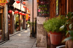 The bonsai plants placed outside a bar at the Shantang Street Suzhou,China. Royalty Free Stock Images