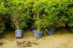 Bonsai plants Stock Photo