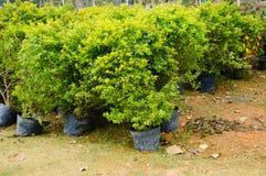 Bonsai plants Royalty Free Stock Photo