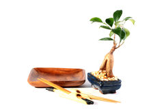 Bonsai and plate Stock Image