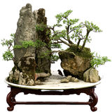 bonsai porcelana Obrazy Royalty Free