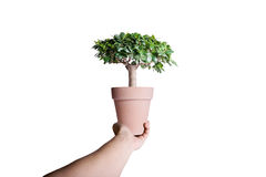Bonsai in pot Royalty Free Stock Photography