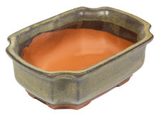 Bonsai pot Stock Photo