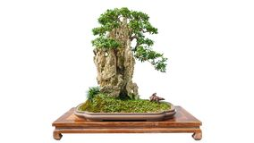 Free Bonsai Potted Landscape Miniascape Dishgarden Penjing Horticulture Royalty Free Stock Images - 197272159