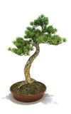 Bonsai potted tree. Isolated on a white background, 3d model Royalty Free Stock Photo