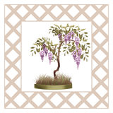 Bonsai potted tree with flowers of wisteria glicinia isolated Stock Images