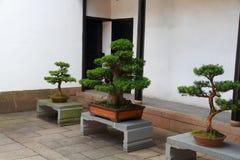 Bonsai at QiYuan Garden in suzhou china Stock Photo
