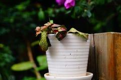 Bonsai rośliny Obrazy Royalty Free
