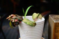 Bonsai rośliny Zdjęcia Royalty Free