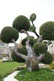 Bonsai in Royal palace area in Bangkok. Bonsai tree on royal palace grounds in Bangkok Thailand Stock Images