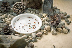 Bonsai seeds in a white plate with cones and stones stock images