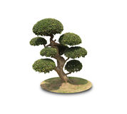 Bonsai shaped decorative tree. Isolated on white Royalty Free Stock Photography