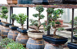 Bonsai shop Stock Photo