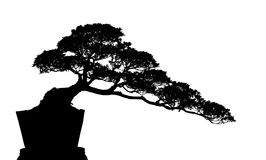 Bonsai Silhouette Stock Images
