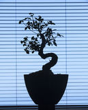 Bonsai silhouette Stock Image