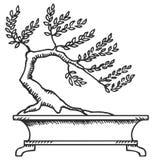Bonsai. Sketch. Royalty Free Stock Photography