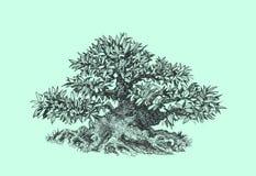 Bonsai som är svartvit Royaltyfri Foto