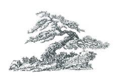Bonsai som är svartvit Arkivfoton