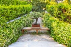 bonsai sosna wiecznozielona miniaturowa zdjęcie royalty free