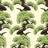 bonsai sosna wiecznozielona miniaturowa Obraz Stock