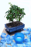 Bonsai spa set. Image of bonsai set isolated Royalty Free Stock Photography