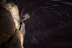 Bonsai Star Trails Stock Image