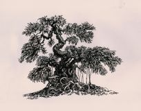 Bonsai in the style of banyan. Graphics, drawing of a tree Stock Photo