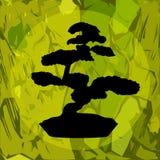 bonsai sylwetka Zdjęcie Stock