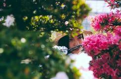Bonsai szklarni centrum rzędy z małymi drzewami Zdjęcia Stock