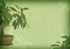 Bonsai textured old paper Royalty Free Stock Image