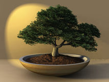 Bonsai Tree. 3D digital rendering Royalty Free Stock Photos