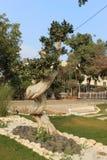 Bonsai Tree. Royalty Free Stock Image