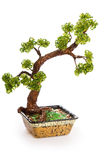 Bonsai tree Stock Photos
