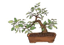 Bonsai tree. Traditional bonsai tree in a pot, hand drawn vector illustration, multicolored, isolated over white background Royalty Free Stock Photos