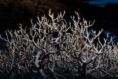 Bonsai tree branches at night. Closeup view Stock Photo