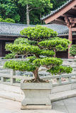 Bonsai tree Chi Lin Nunnery Kowloon Hong Kong Stock Photos