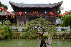 Bonsai tree in Chinese garden Royalty Free Stock Photos
