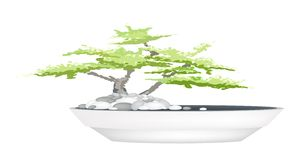 A Bonsai Tree in Flower Pot on White Background Stock Photo