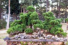 Bonsai tree in the garden. Stock Photos