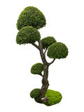 Bonsai tree in garden isolated on white Royalty Free Stock Photo
