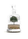 Bonsai tree in glass bottle. Traditional Japanese bonsai tree in decorative glass bottle with stopper; white studio background Stock Images