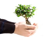 Bonsai tree in hand Stock Photo